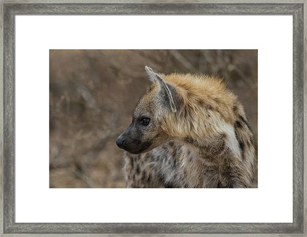Framed Print featuring the photograph H1 by Joshua Able's Wildlife