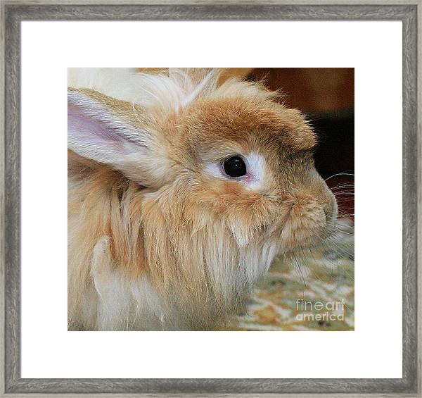 Hairy Rabbit Framed Print