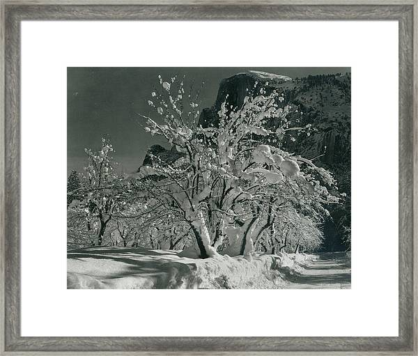 Half Dome, Apple Orchard, Yosemite Framed Print