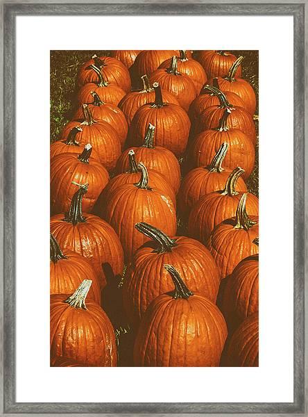 Halloween Harvest - 2 Framed Print