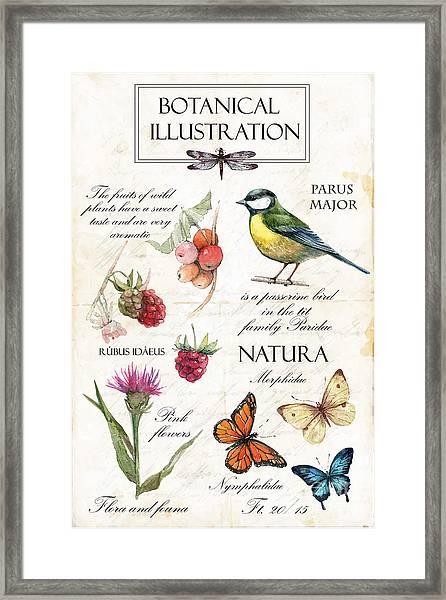 Hand Drawn Botanical Illustration In Framed Print