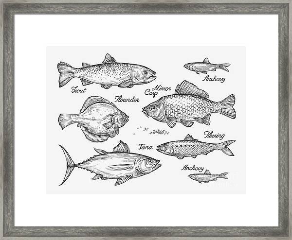 Hand Drawn Fish. Sketch Trout, Carp Framed Print