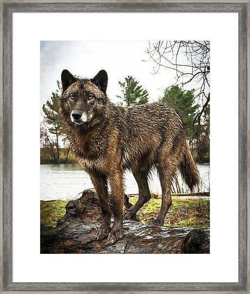 Handsome Niko Framed Print