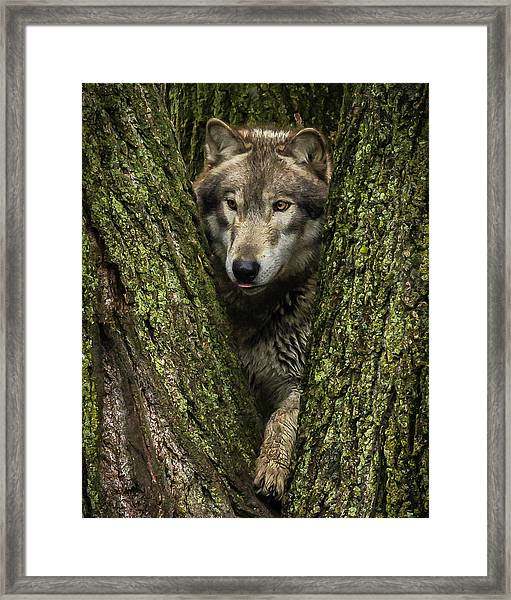 Hangin In The Tree Framed Print