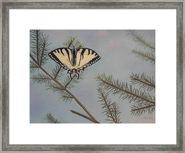 Hanging On To Summer Framed Print