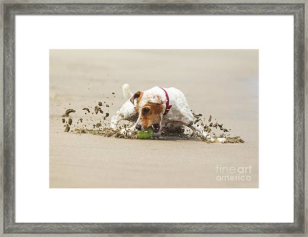 Happy Dog Stopping On The Ball High Framed Print by Ammit Jack
