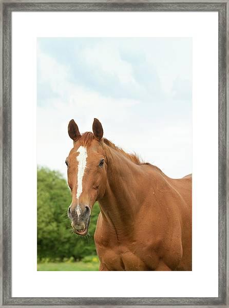 Happy Horse Framed Print