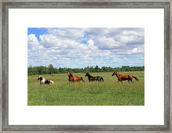 Happy Horses Framed Print by Corrie White Photography