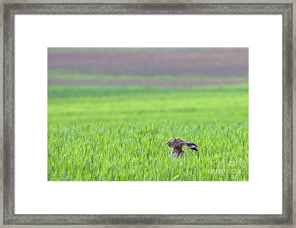Hare Sitting In The Grass On The Field Framed Print