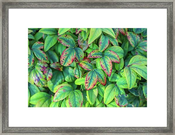 Harmony In The Garden Framed Print