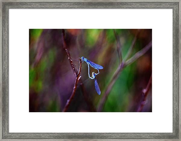 Heart Of Dragonfly Framed Print