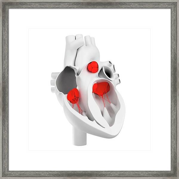 Heart Valves, Artwork Framed Print by Sciepro