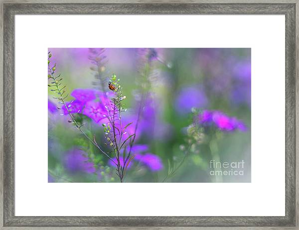 Heartsong In The Meadow Framed Print