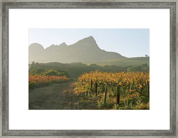 Helderburg Vineyard Framed Print
