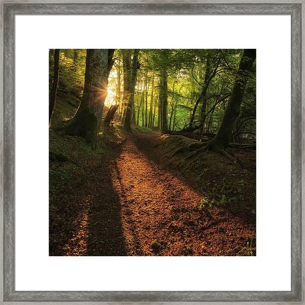 Framed Print featuring the photograph Henllan Woods Sunrise by Elliott Coleman