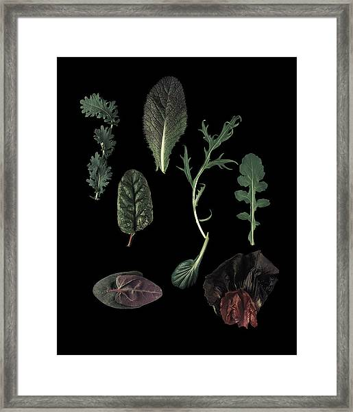 Herbs Leaves On Black Framed Print by Davies And Starr