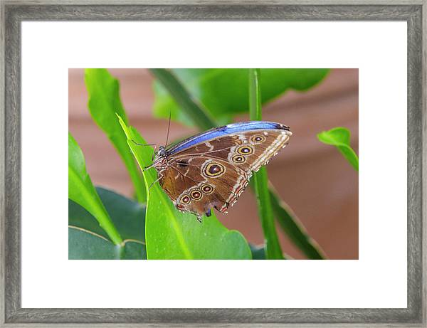 Here's Looking At You Framed Print
