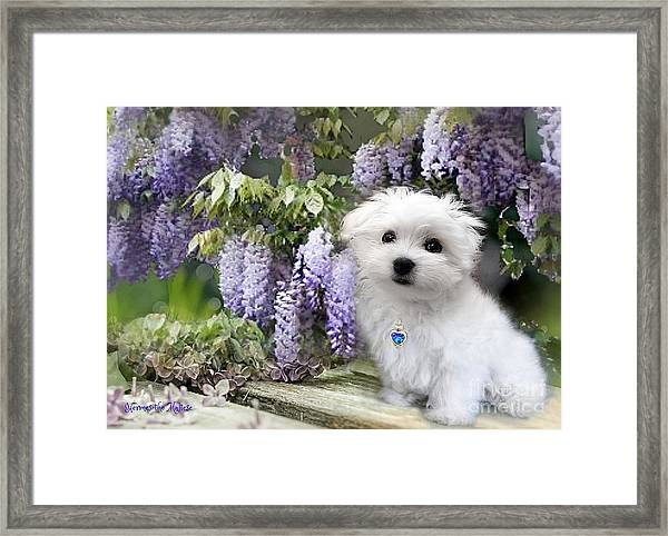 Hermes And Wisteria Framed Print