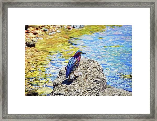 Heron Bluff Framed Print