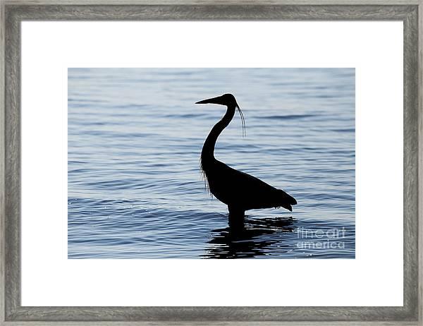 Heron In Silhouette Framed Print