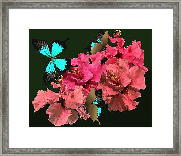 Hibiscus Butterfly Joy Framed Print