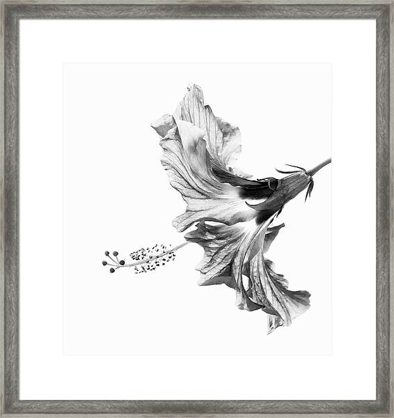 Hibiscus In Black And White Framed Print