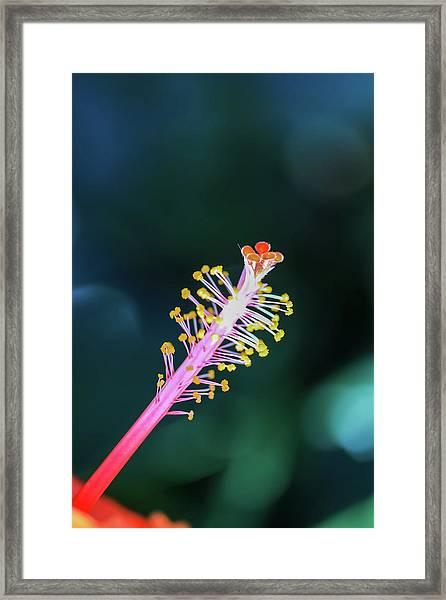 Hibiscus' Pistil Framed Print