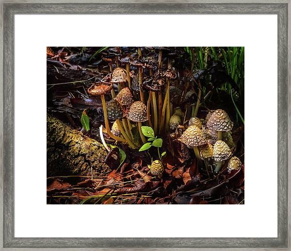 Hidden World Framed Print