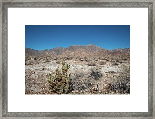 High Desert Cactus Framed Print