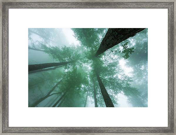 High In The Mist Framed Print