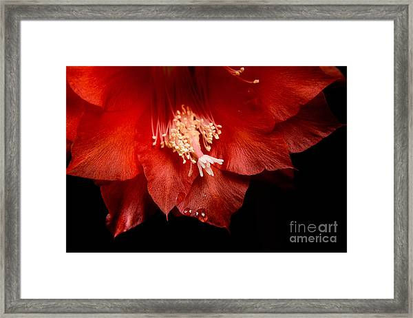 High-quality Macro Photography Red Framed Print