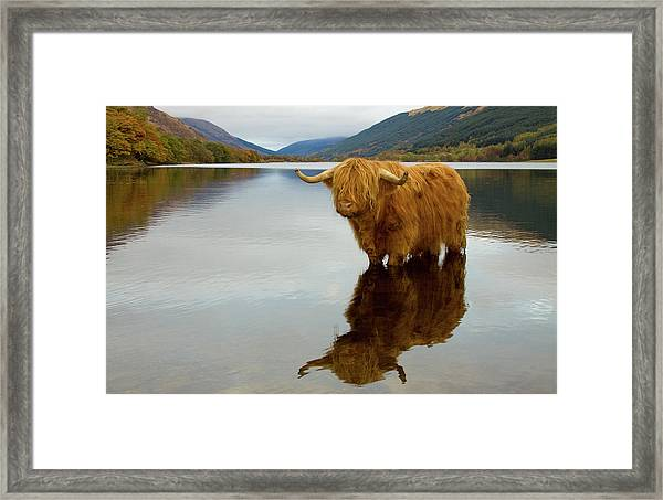 Highland Cow Framed Print by Empato