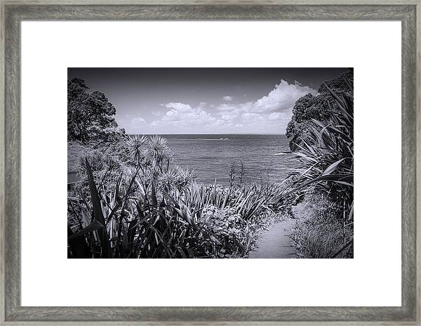 Hiking On Tiritiri Matangi New Zealand Bw Framed Print