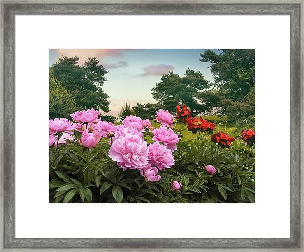 Hillside Peonies Framed Print