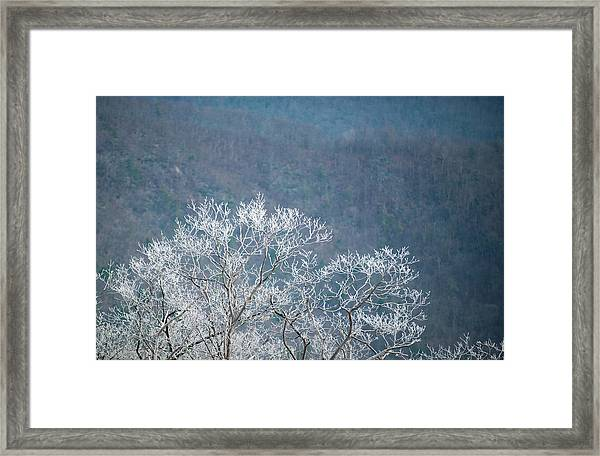 Hoarfrost Collects On Branches Framed Print