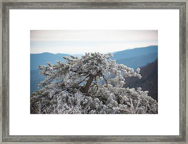 Hoarfrost In The Blue Ridge Mountains Framed Print