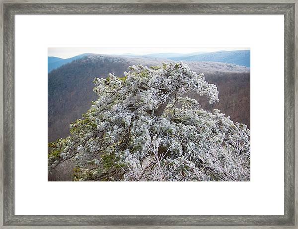 Hoarfrost On Trees Framed Print