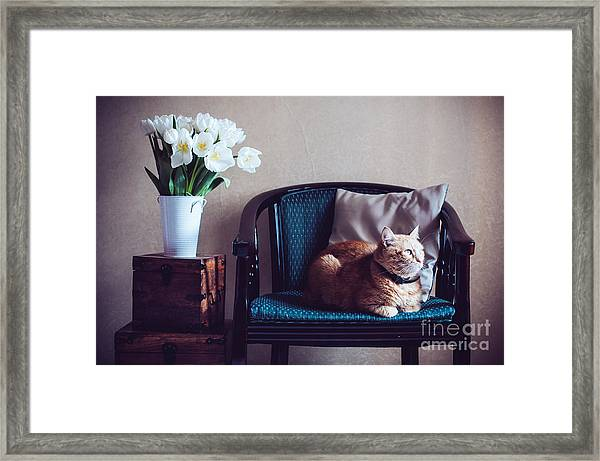 Home Interior, Cat Sitting In An Framed Print