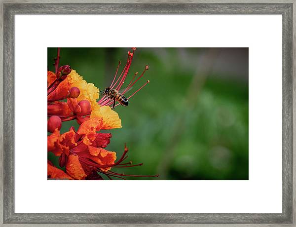 Honey Bee Extraction Framed Print