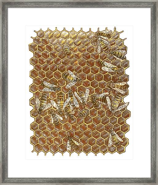 Framed Print featuring the drawing Honey Bees by Clint Hansen
