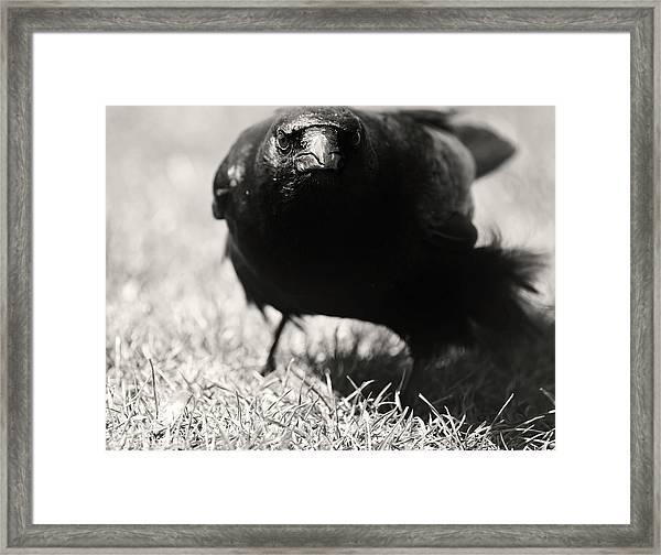 Hood Crow Framed Print