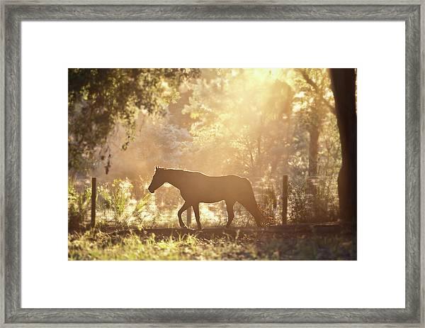 Horse Backlit At Sunset Framed Print