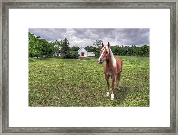 Horse In Pasture Framed Print