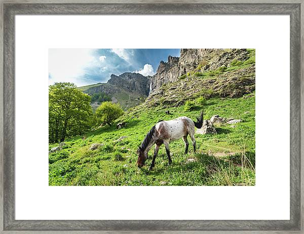 Framed Print featuring the photograph Horse On Balkan Mountain by Milan Ljubisavljevic
