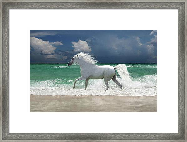 Horse Running Through Surf Framed Print