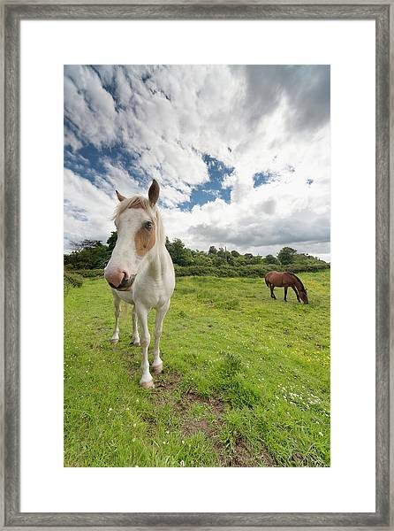 Horses Grazing In A Field Framed Print