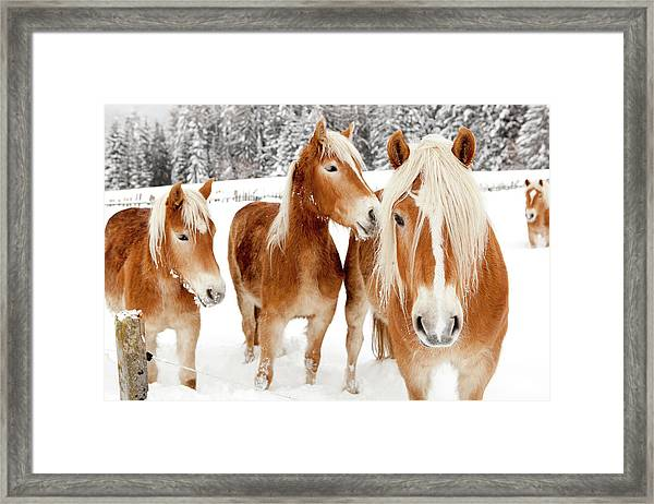Horses In White Winter Landscape Framed Print