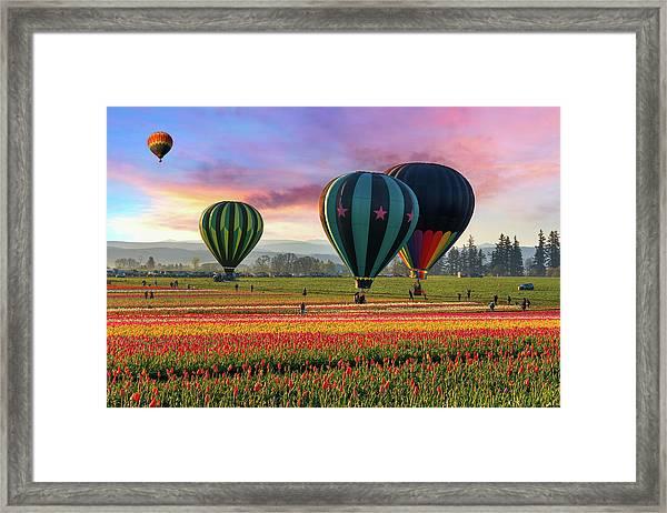 Hot Air Balloons At Sunrise Framed Print