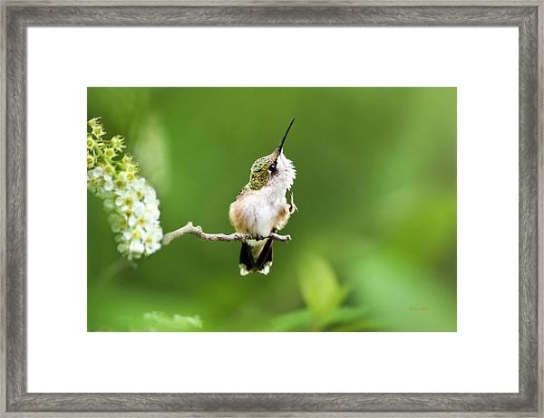 Hummingbird Flexibility Framed Print
