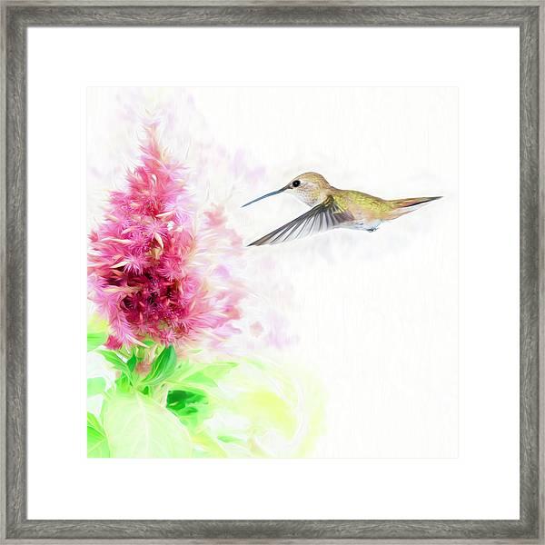 Hummingbird Pastels Framed Print